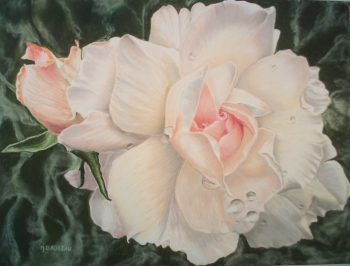Rosa, la rose - 42x52