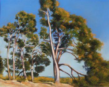 Les pins à Bonnieux - 50x40